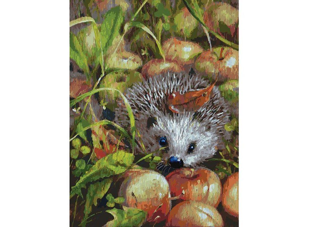 «Яблочный ёжик» Юлии НеприятельКартины по номерам Белоснежка<br><br><br>Артикул: 140-AS<br>Основа: Холст<br>Сложность: очень сложные<br>Размер: 30x40 см<br>Количество цветов: 36<br>Техника рисования: Без смешивания красок