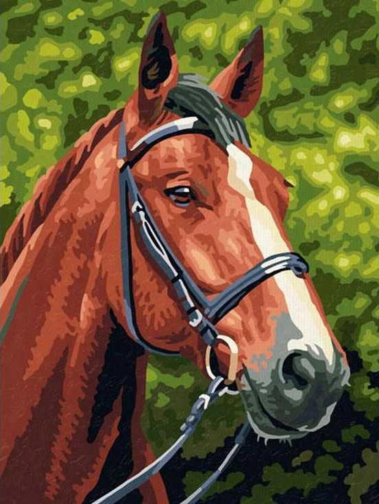 «Гнедая лошадь»Раскраски по номерам Paintboy (Original)<br><br><br>Артикул: EX5076_R<br>Основа: Холст<br>Сложность: средние<br>Размер: 30x40 см<br>Количество цветов: 21<br>Техника рисования: Без смешивания красок