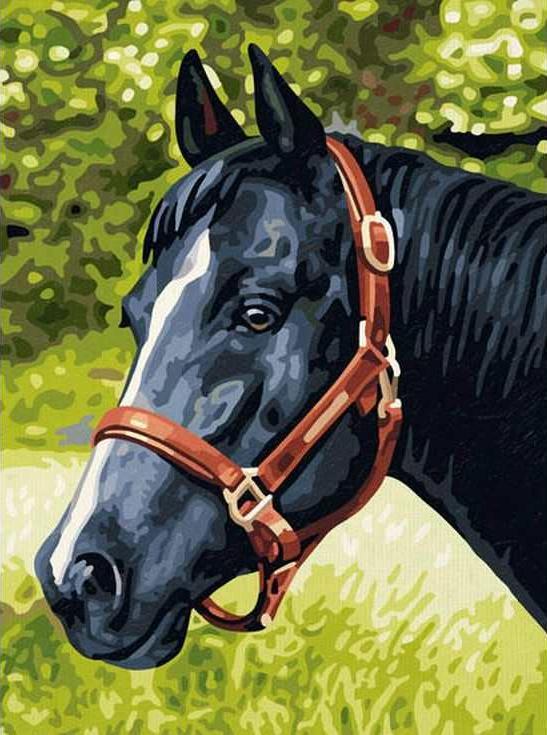 «Вороная лошадь»Раскраски по номерам Paintboy (Original)<br><br><br>Артикул: EX5079_R<br>Основа: Холст<br>Сложность: легкие<br>Размер: 30x40 см<br>Количество цветов: 19<br>Техника рисования: Без смешивания красок