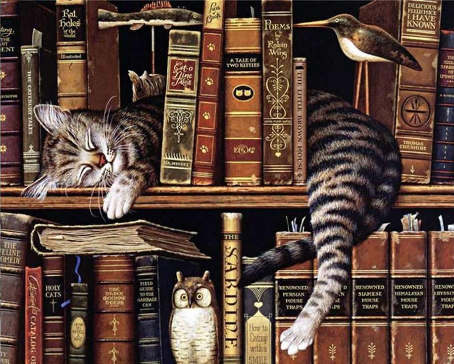 Картина по номерам «Библиотечный кот»Раскраски по номерам Paintboy (Original)<br><br><br>Артикул: GX9557_R<br>Основа: Холст<br>Сложность: легкие<br>Размер: 40x50 см<br>Количество цветов: 27<br>Техника рисования: Без смешивания красок