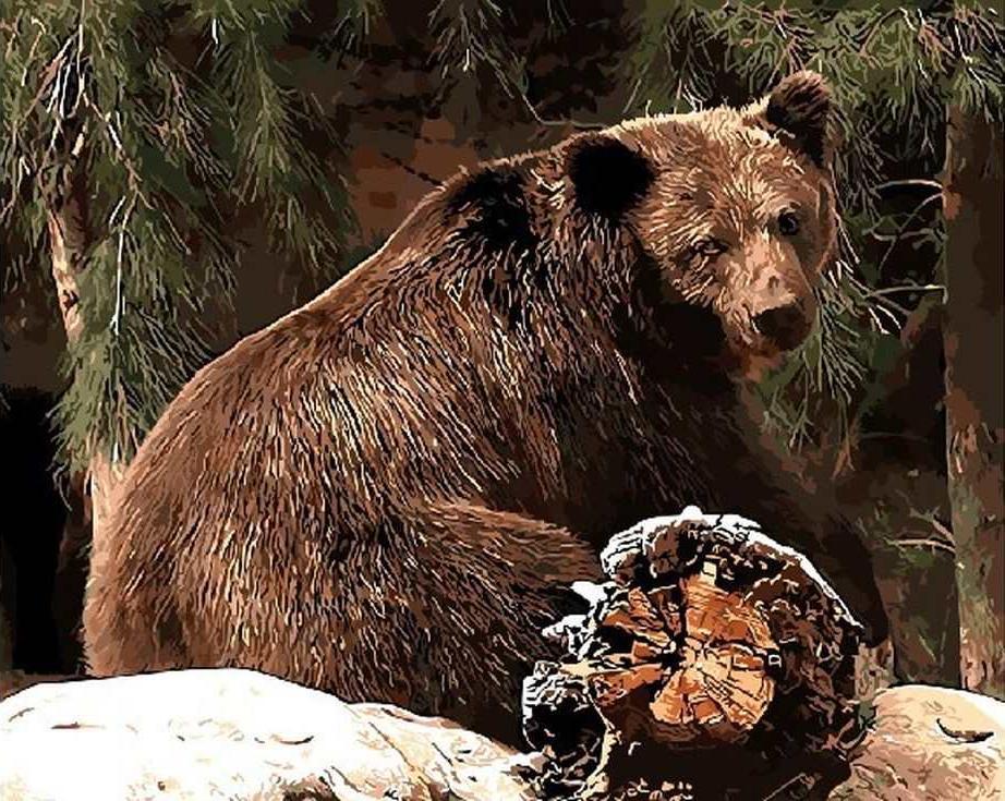 «Бурый медведь»Раскраски по номерам Paintboy (Original)<br><br><br>Артикул: GX9787_R<br>Основа: Холст<br>Сложность: средние<br>Размер: 40x50 см<br>Количество цветов: 24<br>Техника рисования: Без смешивания красок