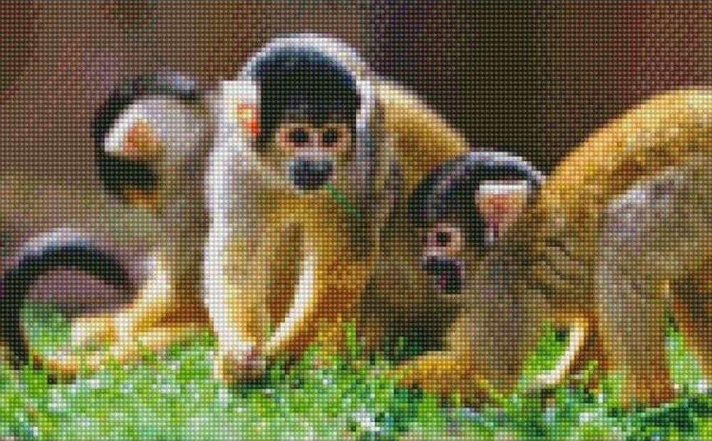 Алмазная вышивка «Беличьи обезьяны»Цветной<br><br><br>Артикул: AG352<br>Основа: Холст на подрамнике<br>Сложность: сложные<br>Размер: 40x50 см<br>Выкладка: Полная<br>Количество цветов: 20-35<br>Тип страз: Круглые непрозрачные (акриловые)