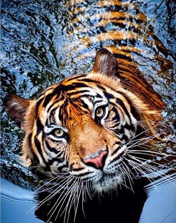 Алмазная вышивка «Тигрица»