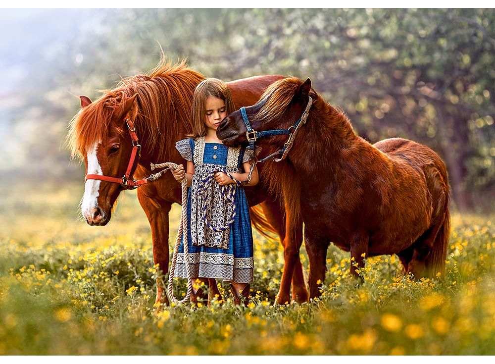 Пазлы «Лошади»Пазлы от производителя Castorland<br><br><br>Артикул: B52509<br>Размер: 47x33 см