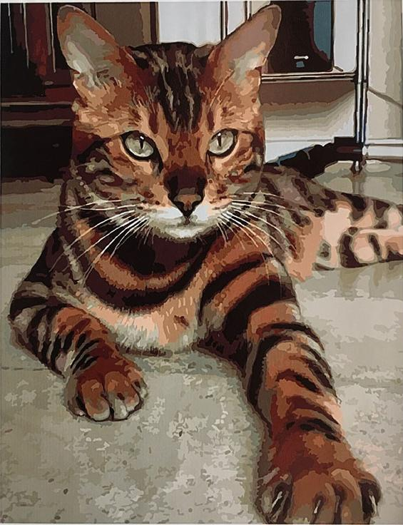 Купить Картина по номерам «Бенгальский кот», Paintboy (Original)
