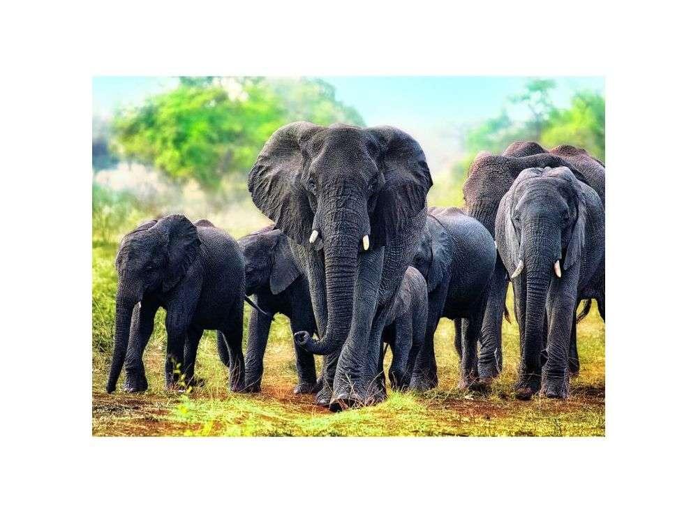 Пазлы «Африканские слоны»Trefl<br><br><br>Артикул: 10442<br>Размер: 68x48 см<br>Возраст: от 12 лет