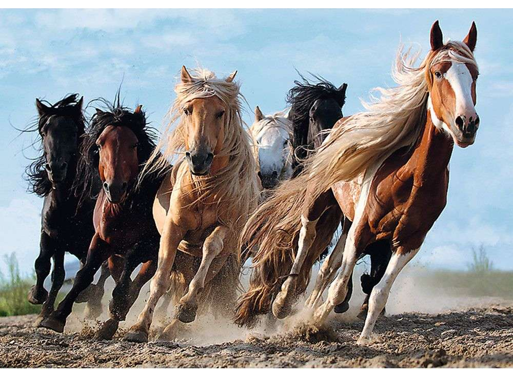 Пазлы «Кони в галопе»Trefl<br><br><br>Артикул: 10446<br>Размер: 68x48 см<br>Возраст: от 12 лет
