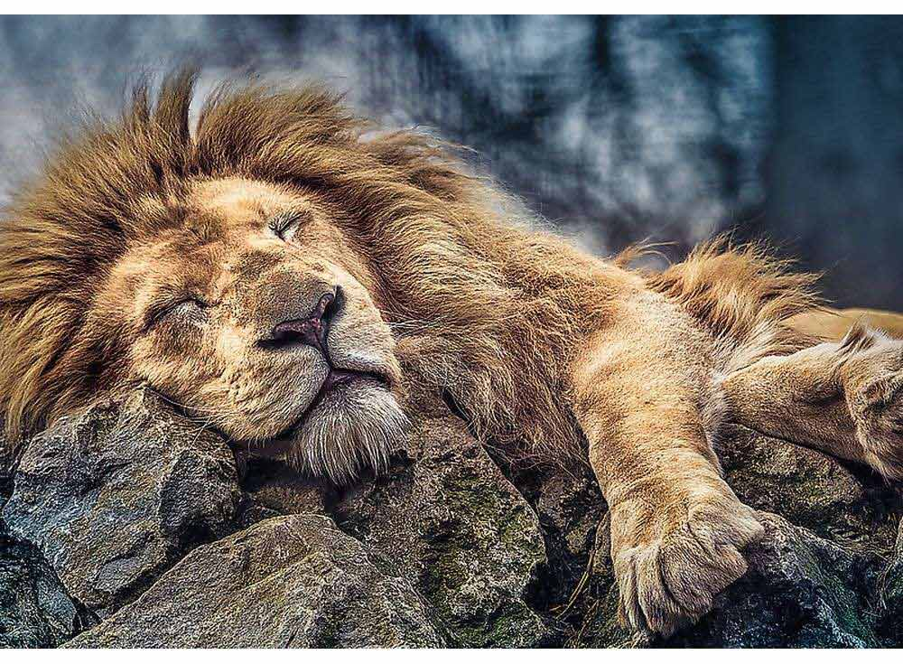 Пазлы «Спящий лев»Trefl<br><br><br>Артикул: 10447<br>Размер: 68x48 см<br>Возраст: от 12 лет