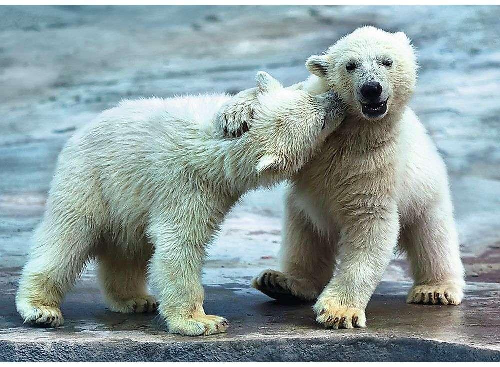 Пазлы «Белые медведи»Trefl<br><br><br>Артикул: 37270<br>Размер: 48x34 см<br>Возраст: от 10 лет