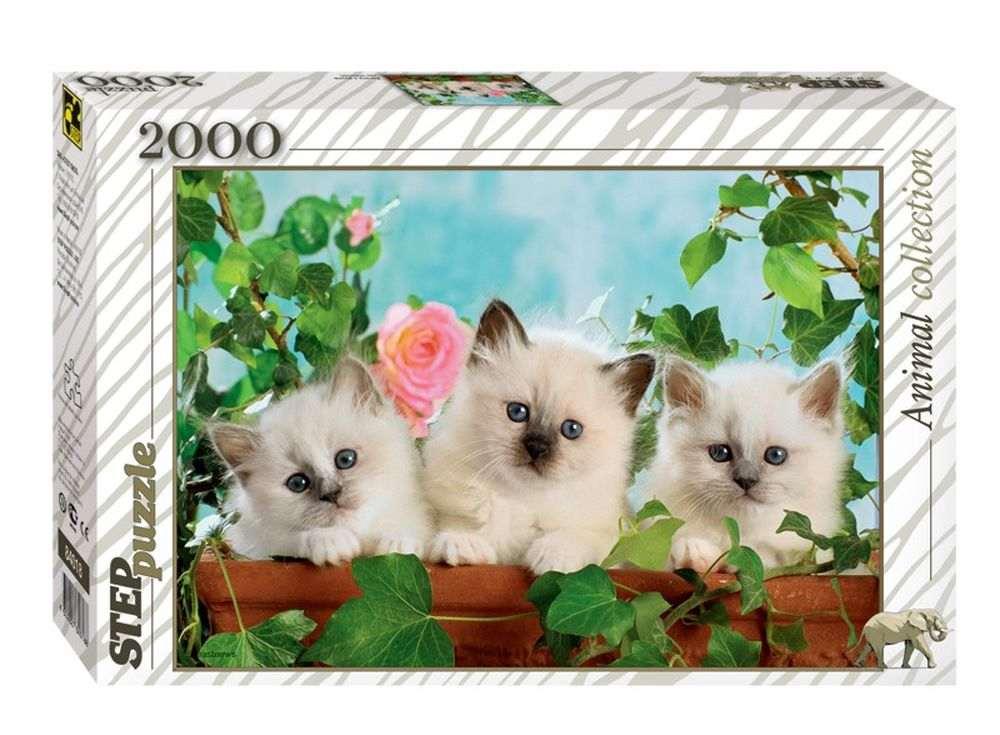 Пазлы «Котята с розой»Пазлы от производителя Step Puzzle<br><br><br>Артикул: 84018<br>Размер: 68x96 см<br>Размер упаковки: 40х27х5,5 см<br>Возраст: от 8 лет