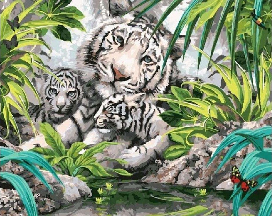 Картина по номерам «Белые тигрята»Paintboy (Premium)<br><br><br>Артикул: GX7877<br>Основа: Холст<br>Сложность: сложные<br>Размер: 40x50 см<br>Количество цветов: 26<br>Техника рисования: Без смешивания красок