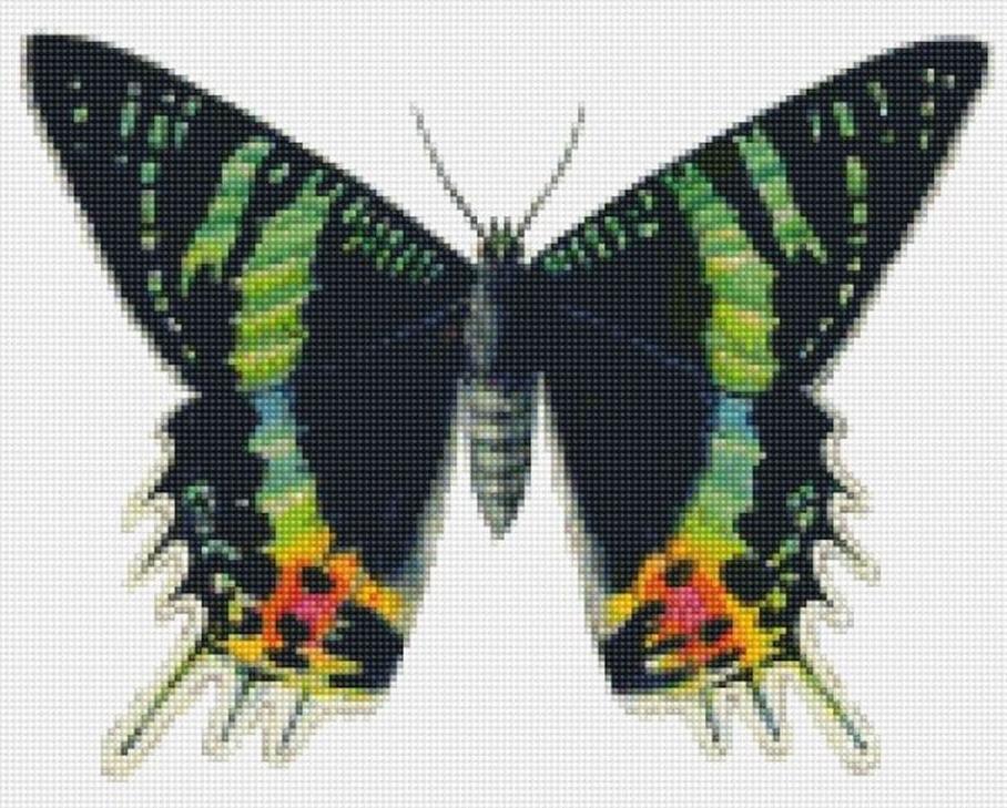Стразы «Бабочка Урания»Цветной<br><br><br>Артикул: CI-015<br>Основа: Холст на подрамнике<br>Сложность: сложные<br>Размер: 30x40 см<br>Выкладка: Полная<br>Количество цветов: 20-35<br>Тип страз: Круглые непрозрачные (акриловые)