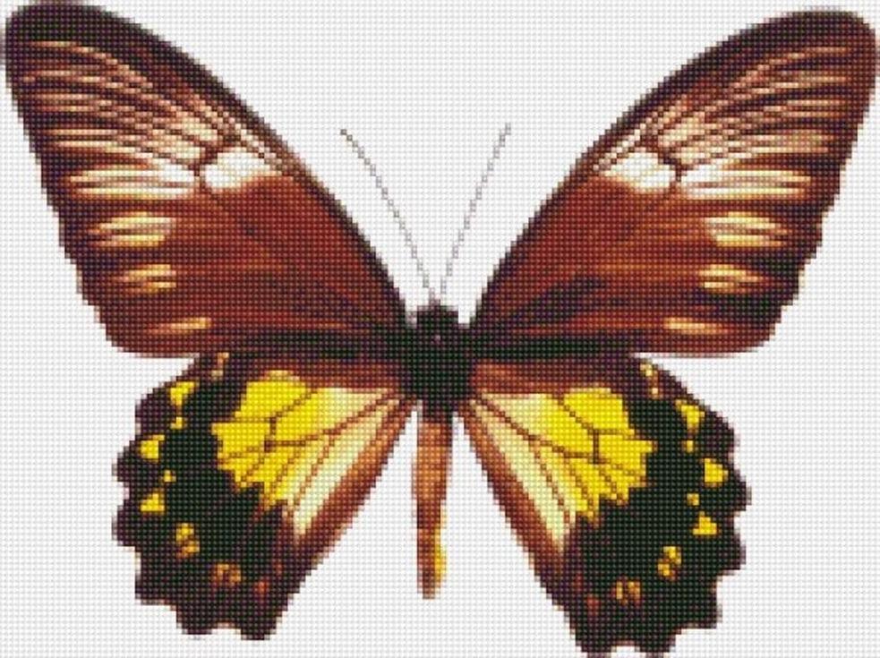 Стразы «Малайская бабочка»Цветной<br><br><br>Артикул: CI-017<br>Основа: Холст на подрамнике<br>Сложность: сложные<br>Размер: 30x40 см<br>Выкладка: Полная<br>Количество цветов: 20-35<br>Тип страз: Круглые непрозрачные (акриловые)