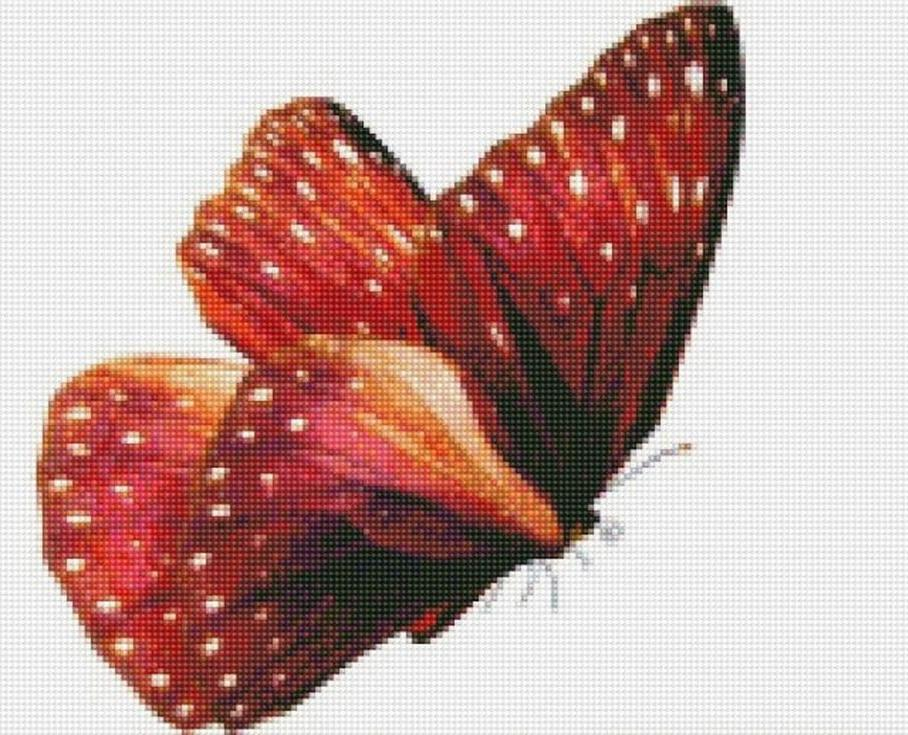 Стразы «Бабочка Красный монарх»Цветной<br><br><br>Артикул: CI-018<br>Основа: Холст на подрамнике<br>Сложность: сложные<br>Размер: 30x40 см<br>Выкладка: Полная<br>Количество цветов: 20-35<br>Тип страз: Круглые непрозрачные (акриловые)