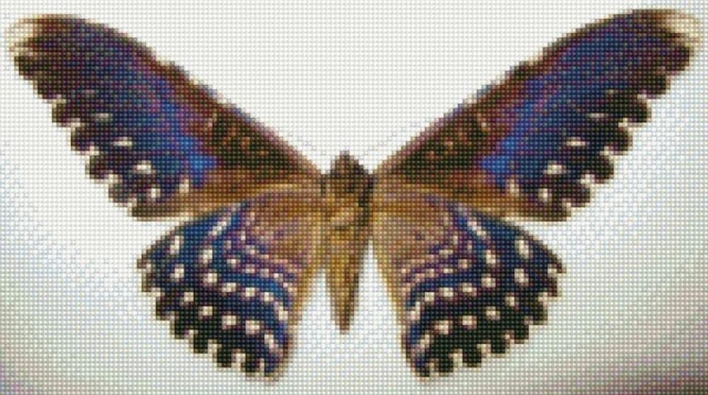Стразы «Бабочка Совка агриппина»Цветной<br><br><br>Артикул: CI-021<br>Основа: Холст на подрамнике<br>Сложность: сложные<br>Размер: 30x40 см<br>Выкладка: Полная<br>Количество цветов: 20-35<br>Тип страз: Круглые непрозрачные (акриловые)
