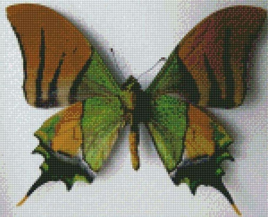 Стразы «Индийская бабочка»Цветной<br><br><br>Артикул: CI-022<br>Основа: Холст на подрамнике<br>Сложность: сложные<br>Размер: 30x40 см<br>Выкладка: Полная<br>Количество цветов: 20-35<br>Тип страз: Круглые непрозрачные (акриловые)