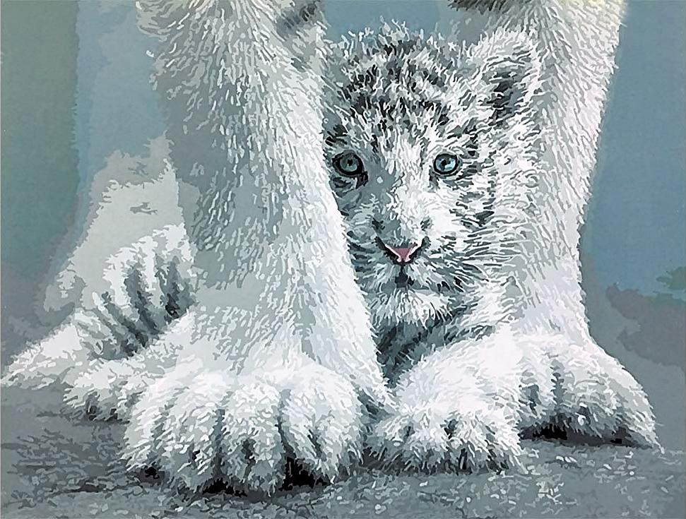 Картина по номерам «Белый тигренок»Paintboy (Premium)<br><br><br>Артикул: GX4269<br>Основа: Холст<br>Сложность: средние<br>Размер: 40x50 см<br>Количество цветов: 18<br>Техника рисования: Без смешивания красок