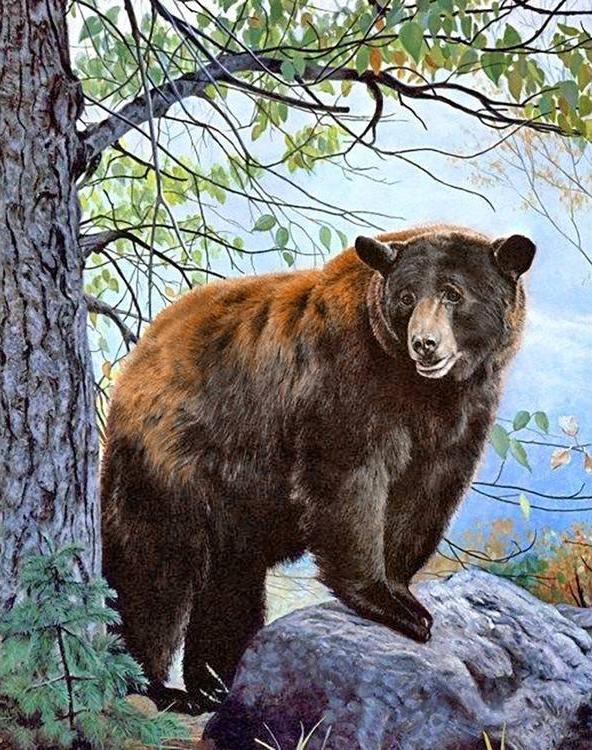 Алмазная вышивка «Бурый медведь»Алмазная вышивка Гранни<br><br><br>Артикул: Ag085<br>Основа: Холст без подрамника<br>Сложность: сложные<br>Размер: 38x48 см<br>Выкладка: Полная<br>Количество цветов: 47<br>Тип страз: Квадратные