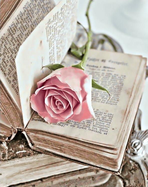 Алмазная вышивка «Любовный роман»Алмазная вышивка Гранни<br><br><br>Артикул: Ag3424<br>Основа: Холст без подрамника<br>Сложность: сложные<br>Размер: 38х48 см<br>Выкладка: Полная<br>Количество цветов: 42<br>Тип страз: Квадратные