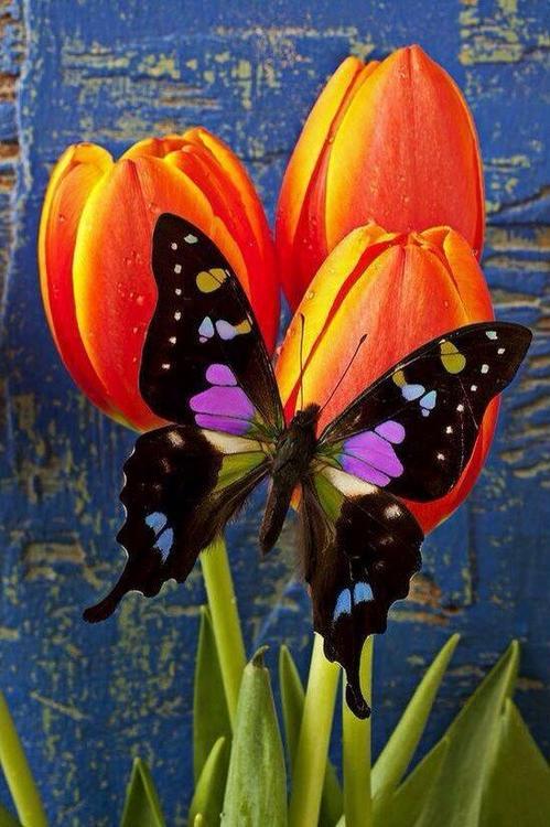 Алмазная вышивка «Бабочка на тюльпанах»Алмазная вышивка Гранни<br><br><br>Артикул: Ag3436<br>Основа: Холст без подрамника<br>Сложность: сложные<br>Размер: 27х38 см<br>Выкладка: Полная<br>Количество цветов: 34<br>Тип страз: Квадратные