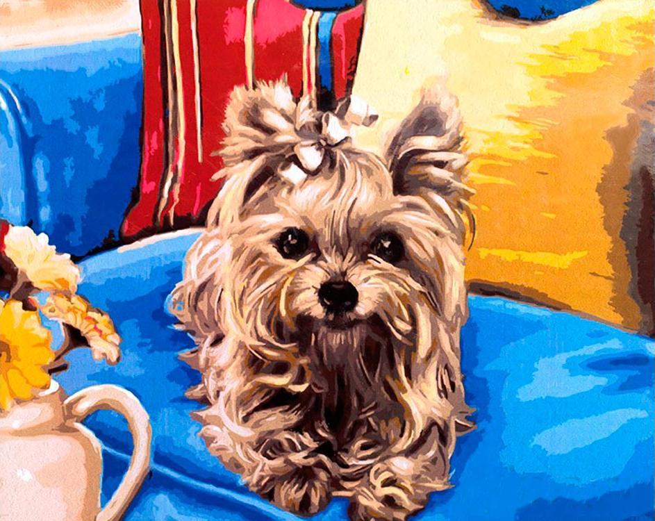 Картина по номерам «Йоркширский терьер»Paintboy (Premium)<br><br><br>Артикул: GX4548<br>Основа: Холст<br>Сложность: средние<br>Размер: 40x50 см<br>Количество цветов: 23<br>Техника рисования: Без смешивания красок