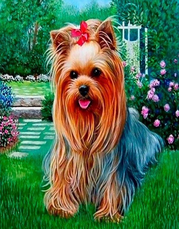 Картина по номерам «Девочка-йорк»Paintboy (Premium)<br><br><br>Артикул: GX4567<br>Основа: Холст<br>Сложность: средние<br>Размер: 40x50 см<br>Количество цветов: 25<br>Техника рисования: Без смешивания красок