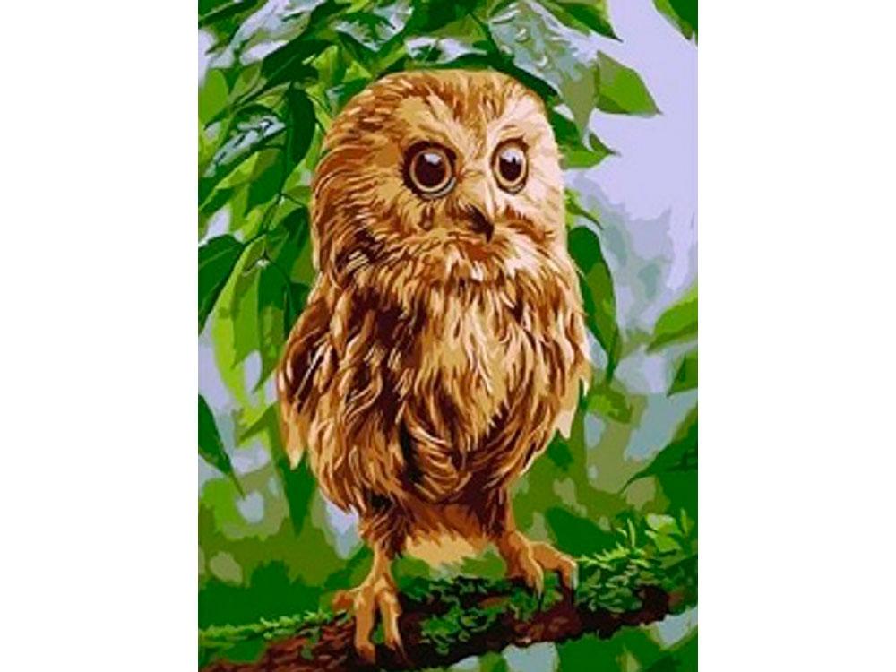Картина по номерам «Удивленный совенок»Paintboy (Premium)<br><br><br>Артикул: GX5499<br>Основа: Холст<br>Сложность: легкие<br>Размер: 40x50 см<br>Количество цветов: 18<br>Техника рисования: Без смешивания красок