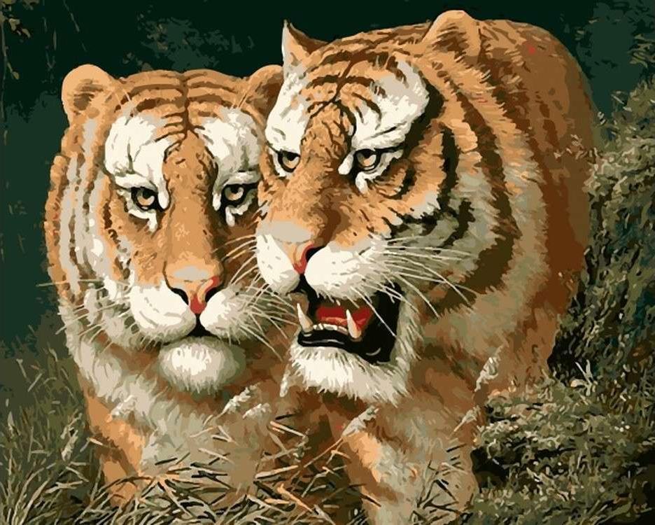 Картина по номерам «Любовь тигра»Цветной (Premium)<br><br><br>Артикул: MG6047_Z<br>Основа: Холст<br>Сложность: сложные<br>Размер: 40x50 см<br>Количество цветов: 23<br>Техника рисования: Без смешивания красок