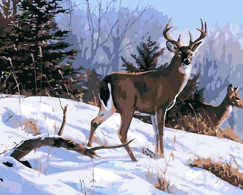 Картина по номерам «Олени на снегу»Цветной (Premium)<br><br><br>Артикул: MG6084_Z<br>Основа: Холст<br>Сложность: сложные<br>Размер: 40x50 см<br>Количество цветов: 23<br>Техника рисования: Без смешивания красок