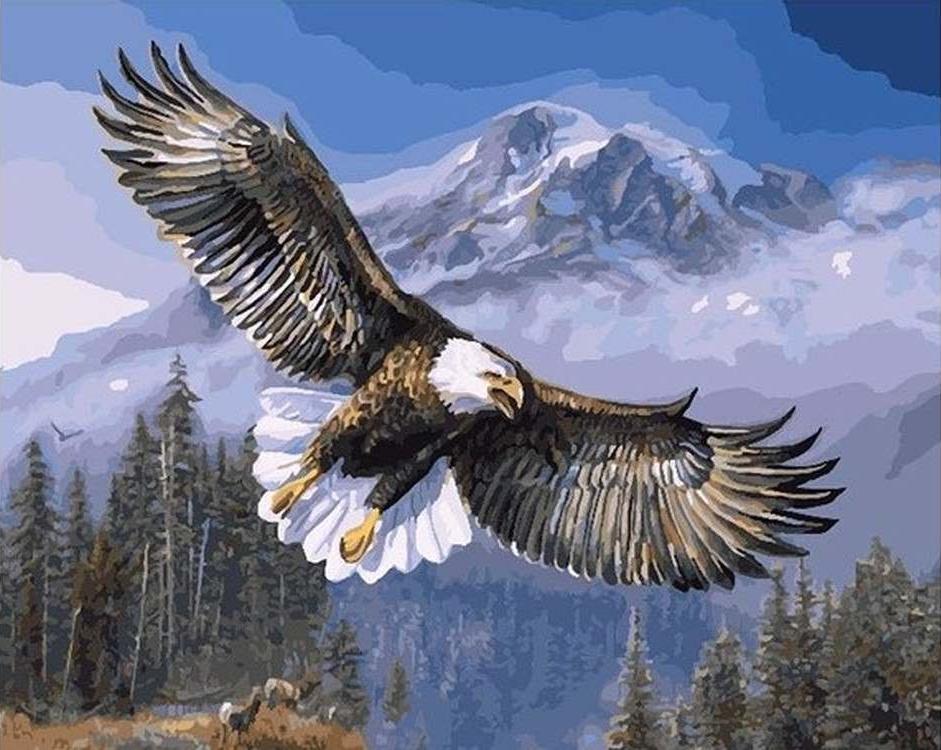 Картина по номерам «Белоголовый орлан»Paintboy (Premium)<br><br><br>Артикул: GX7134<br>Основа: Холст<br>Размер: 40x50 см<br>Количество цветов: 29<br>Техника рисования: Без смешивания красок