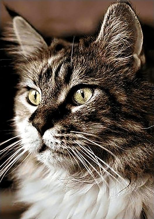 Алмазная вышивка «Домашний кот»Алмазная вышивка Гранни<br><br><br>Артикул: Ag159<br>Основа: Холст без подрамника<br>Сложность: средние<br>Размер: 19x27 см<br>Выкладка: Полная<br>Количество цветов: 23<br>Тип страз: Квадратные