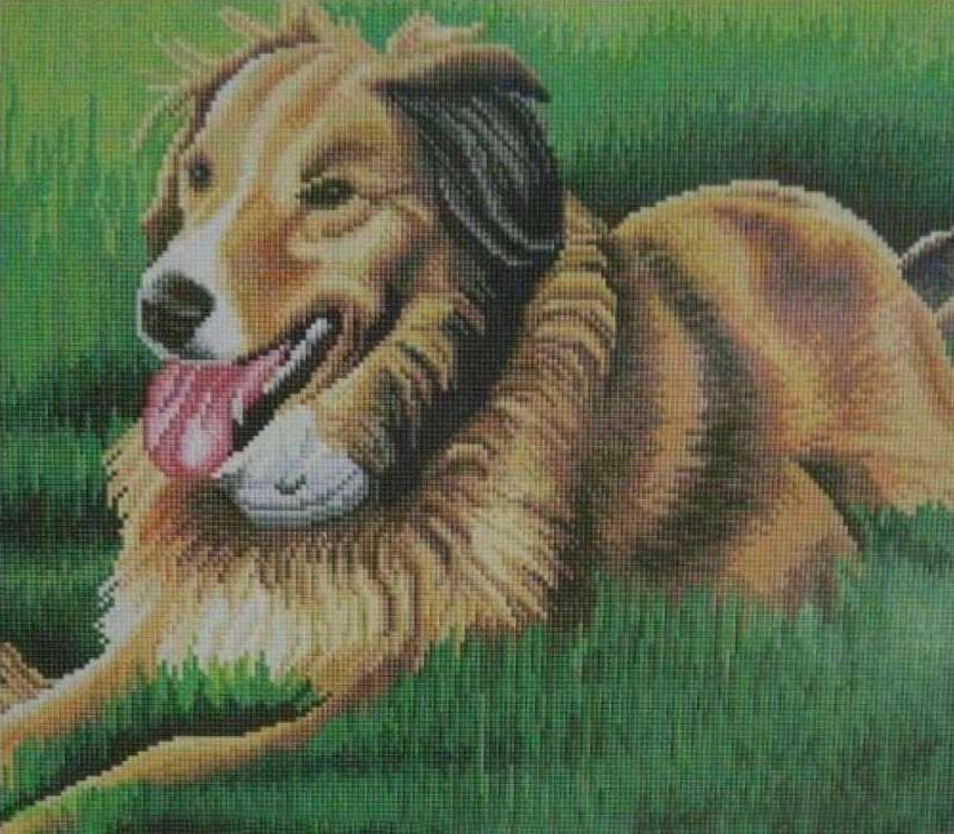 Алмазная вышивка «Собака на лужайке»Алмазная вышивка Painting Diamond<br><br><br>Артикул: GF0975<br>Основа: Холст на подрамнике<br>Сложность: сложные<br>Размер: 40x50 см<br>Выкладка: Полная<br>Количество цветов: 30-40