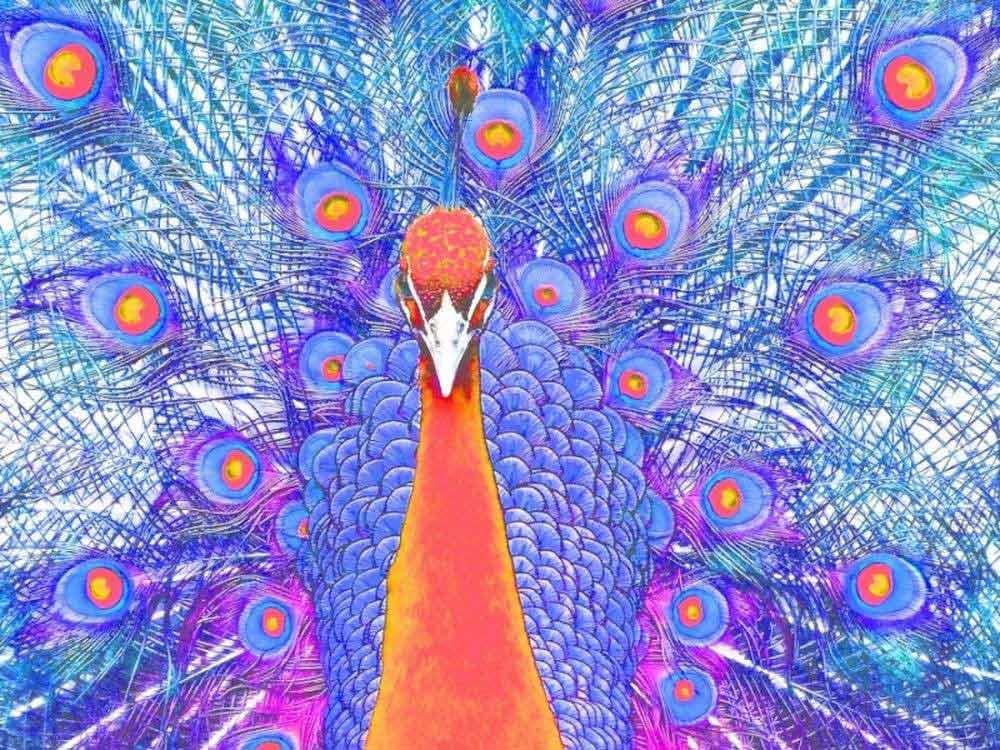 Картина по номерам «Павлин»Раскраски по номерам Color Kit<br><br><br>Артикул: KS039<br>Основа: Картон<br>Сложность: сложные<br>Размер: 30x40 см<br>Количество цветов: 16<br>Техника рисования: Без смешивания красок