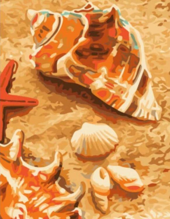 Картина по номерам «Ракушки»Paintboy (Premium)<br><br><br>Артикул: EX5091<br>Основа: Холст<br>Сложность: легкие<br>Размер: 30x40 см<br>Количество цветов: 18<br>Техника рисования: Без смешивания красок