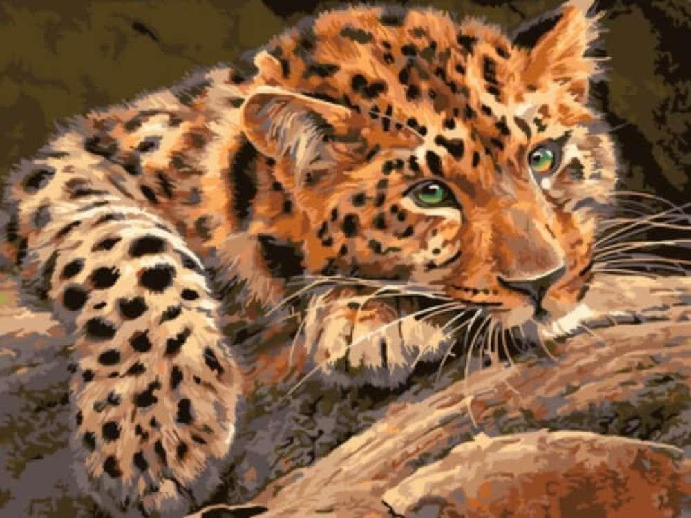 Картина по номерам «Леопард»Цветной (Standart)<br><br><br>Артикул: EX5807_Z<br>Основа: Холст<br>Сложность: легкие<br>Размер: 30x40 см<br>Количество цветов: 17<br>Техника рисования: Без смешивания красок