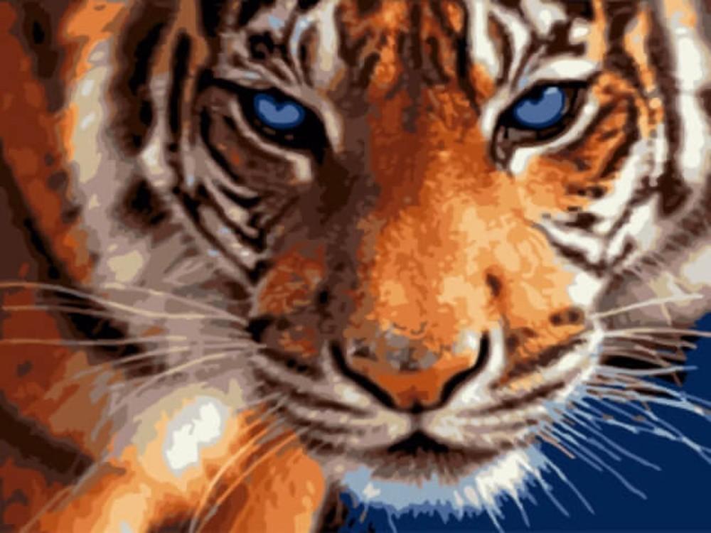 Картина по номерам «Взгляд тигра»Цветной (Standart)<br><br>