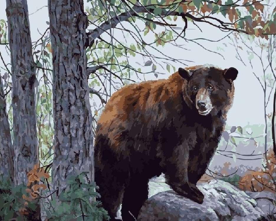 Картина по номерам «Бурый медведь»Раскраски по номерам<br><br>