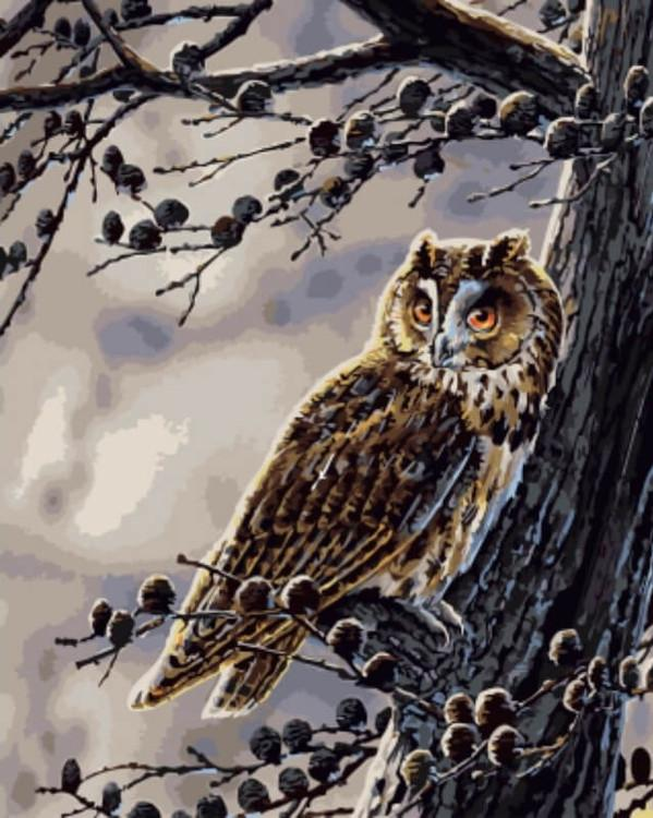 Картина по номерам «Сова на дереве» Jan WeeninkЦветной (Standart)<br><br><br>Артикул: GX5341_Z<br>Основа: Холст<br>Сложность: средние<br>Размер: 40x50 см<br>Количество цветов: 23<br>Техника рисования: Без смешивания красок