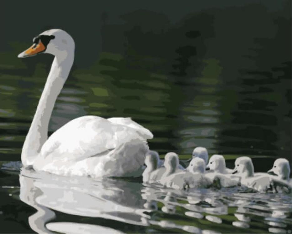 Картина по номерам «Лебедь с лебедятами»Цветной (Standart)<br><br>