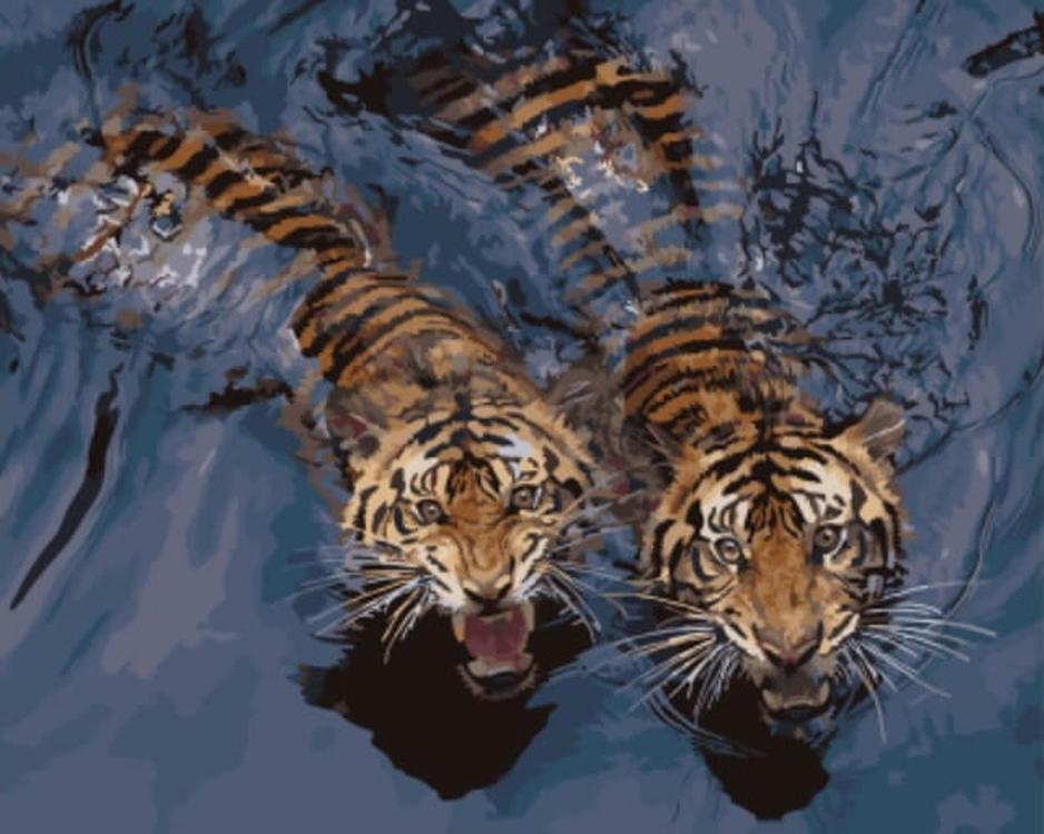 Картина по номерам «Мощные тигры в воде»Цветной (Standart)<br><br><br>Артикул: GX5729_Z<br>Основа: Холст<br>Сложность: средние<br>Размер: 40x50 см<br>Количество цветов: 21<br>Техника рисования: Без смешивания красок
