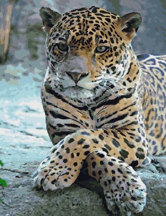 Картина по номерам «Леопард со скрещенными лапами»Цветной (Standart)<br><br><br>Артикул: GX5730_Z<br>Основа: Холст<br>Сложность: средние<br>Размер: 40x50 см<br>Количество цветов: 27<br>Техника рисования: Без смешивания красок