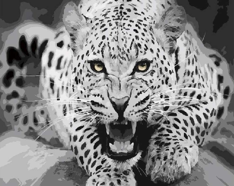Картина по номерам «Пятнистый леопард»Цветной (Standart)<br><br><br>Артикул: GX5739_Z<br>Основа: Холст<br>Сложность: легкие<br>Размер: 40x50 см<br>Количество цветов: 14<br>Техника рисования: Без смешивания красок