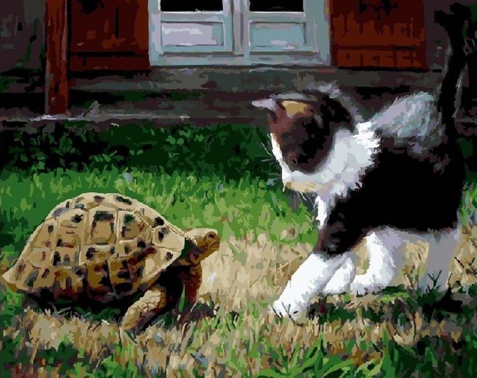 Картина по номерам «Котенок и черепаха» Джузеппе КаччиапуотиЦветной (Standart)<br><br><br>Артикул: GX5753_Z<br>Основа: Холст<br>Сложность: сложные<br>Размер: 40x50 см<br>Количество цветов: 28<br>Техника рисования: Без смешивания красок