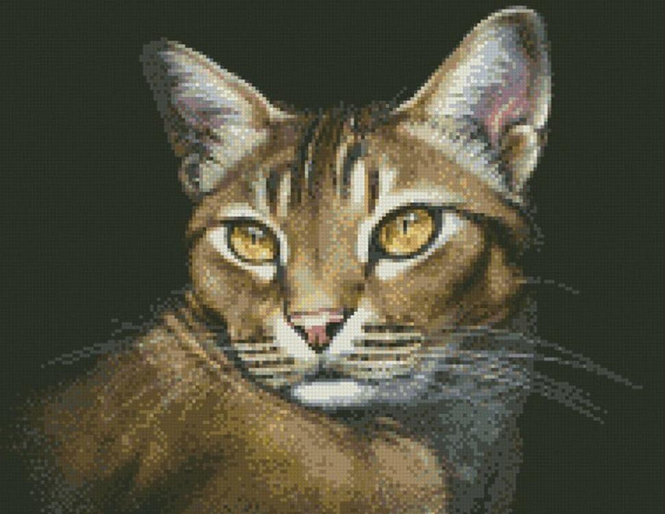 Алмазная вышивка «Абиссинская кошка»Алмазная вышивка Паутинка<br><br><br>Артикул: М-354<br>Основа: Холст без подрамника<br>Сложность: сложные<br>Размер: 35x45 см<br>Выкладка: Полная<br>Количество цветов: 24<br>Тип страз: Квадратные