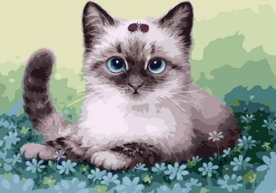 Картина по номерам «Котенок в незабудках»Paintboy (Premium)<br><br><br>Артикул: GX4757<br>Основа: Холст<br>Сложность: средние<br>Размер: 40x50 см<br>Количество цветов: 22<br>Техника рисования: Без смешивания красок