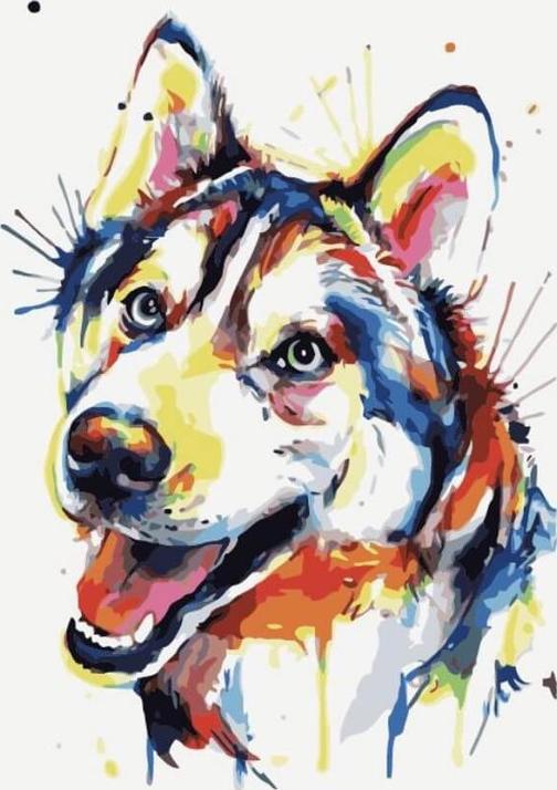 Картина по номерам «Разноцветный щенок»Цветной (Premium)<br><br><br>Артикул: ME1091_Z<br>Основа: Холст<br>Сложность: средние<br>Размер: 30x40 см<br>Количество цветов: 22<br>Техника рисования: Без смешивания красок