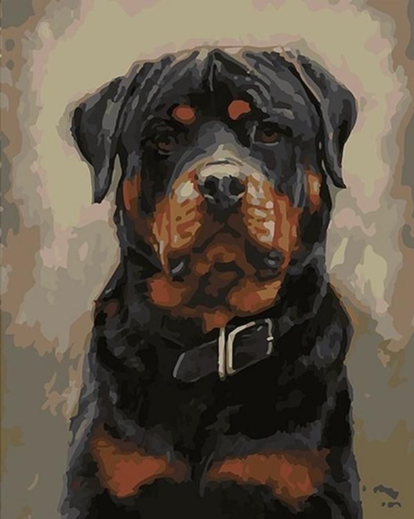 Картина по номерам «Ротвейлер»Paintboy (Premium)<br><br>