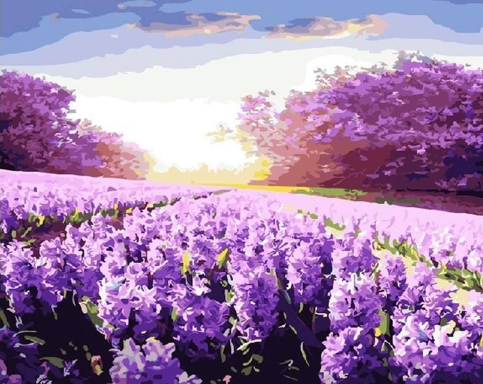 Картина по номерам «Солнечная лаванда»Раскраски по номерам<br><br>