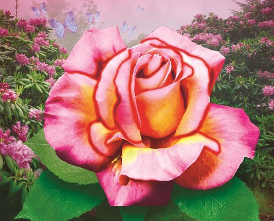 Купить Алмазная вышивка «Нежная роза», Color KIT
