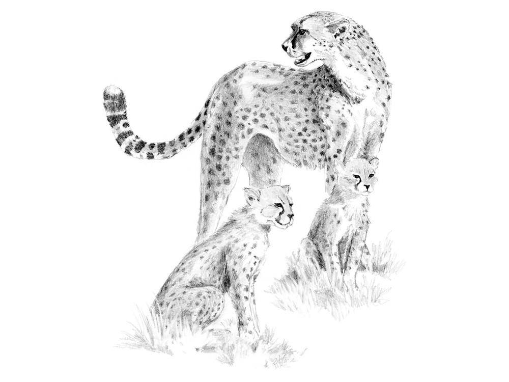 Набор для скетчинга «Леопарды»